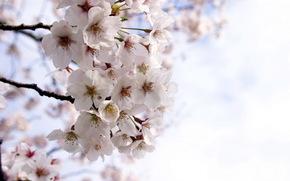 春天, 花园, 性质