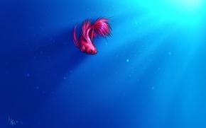 Arte, piccoli pesci, pesce, galletto, bolle, luce, sfondo