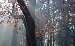 arbre, feuillage, lumire, Nature
