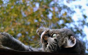 cat, is, mustache, eyes