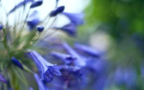 Bells, flowers, buds, blue, macro, reflections, blurring