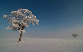 Winter, Trees, frost, snow, Blue, sky