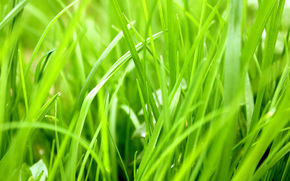 grass, green, plant, herbaceous, juicy, season, greens, heat