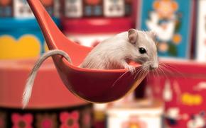 mouse-gerbillo, cucchiaio, coda, bianco, rosso