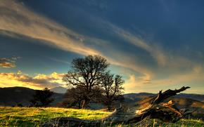 landscape, grass, sunset