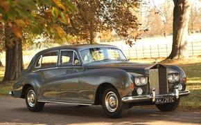Rolls Royce, limousine, anteriore, alberi, Altri marchi