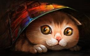 艺术, 猫, 吻部, 藏, 面纱