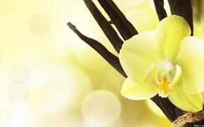 орхидея, желтая, красиво, цветы, экзотика