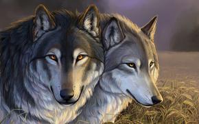 Wolves, field, ears, grass, clouds