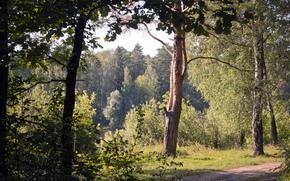 arbres, fort, Nature, feuillage, terrain, confort, jour