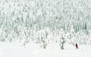 neige, hiver, fort, arbres, aiguilles, skieur, coller, Ski, blanc, ZAPOROSHILO, rouge, costume