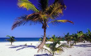 costa, costa, sabbia, DARA, estate, oceano, orizzonte, blu, netto, cielo, paradiso