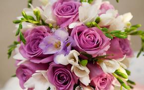 porpora, fiori, Roses, mazzo di fiori