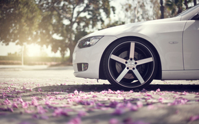 White, front end, nose, wheel, CDs, macro, asphalt, Petals, spring, reflections, bokeh, bmw