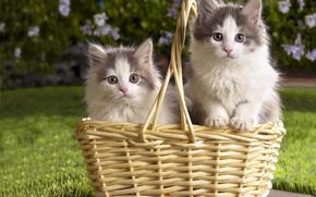 Gattini, cestino, erba