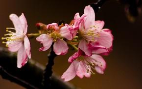 fiore, Carta da parati, Macro