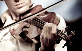 violino, musica, gioco