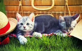 gatti, gattino, erba, cappuccio, picnic