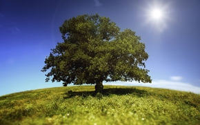 solitaire, arbre, soleil, ciel, herbe, Nature, paysage