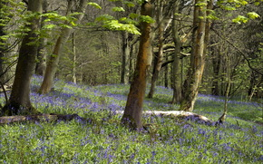 лес, цветы, природа