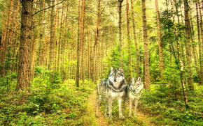 forest, Wolves, texture, style
