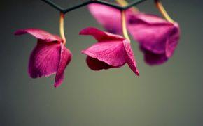 орхидея, ветка, три
