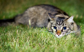 kot, kotek, adny, oczy, trawa