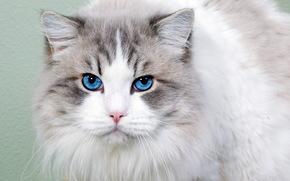 猫, 看, 肖像