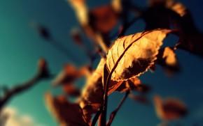 verlsst, Herbst, Farbe
