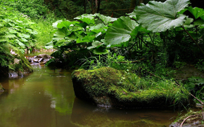 bosque, hierba, verduras, musgo, piedras, arroyo, primavera, deja, BARDANA