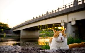 cat, bridge, sunset