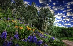森林, 树, 草, 花卉, 灌木, RATITELNOST, 青菜, 道路, 春天, 天空, 云, 树林