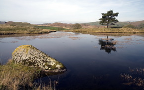 lago, albero, natura, paesaggio
