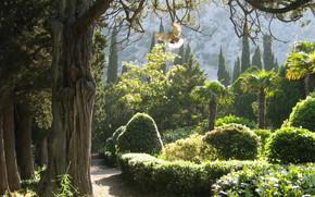 Crimea, natura, piccione, giardino