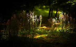 цветы, свет, природа