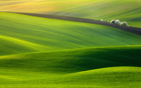 landscape, field, grass, meadow, nature, green