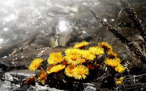 フラワーズ, 自然, 背景