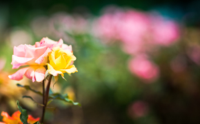 Flowers, summer, light, nature