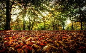 bosque, Los rboles, rama, deja, follaje, otoo, sol, luz, los rayos, verduras, primavera