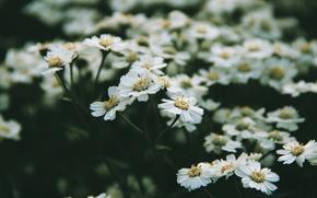 tenderness, flowers, Morning