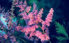 flower, tenderness, romance