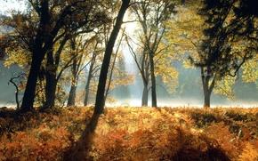 forest, nature, autumn, kyanite, fog