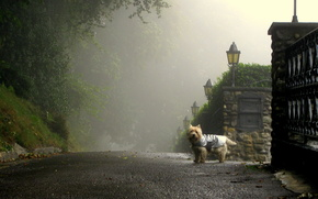 Morning, fog, Street, Lane, dog, road, lights