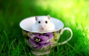 tazza, erba, mouse, prato, estate