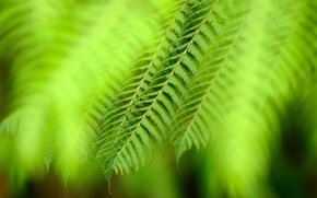 plant, leaflets, greens, macro
