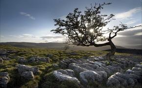 tree, stones, nature, landscape