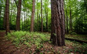 albero, foresta, natura