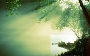 солнце, река, дерево, вода