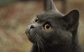 gatto, Infedeli, favorito, gara, furbo, furbo, pigro, saggio, Solo, amico