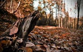 forest, Trees, yellow, leaves, autumn, stump, foliage, Log cabin, Cortex, macro, focus, REZNOST